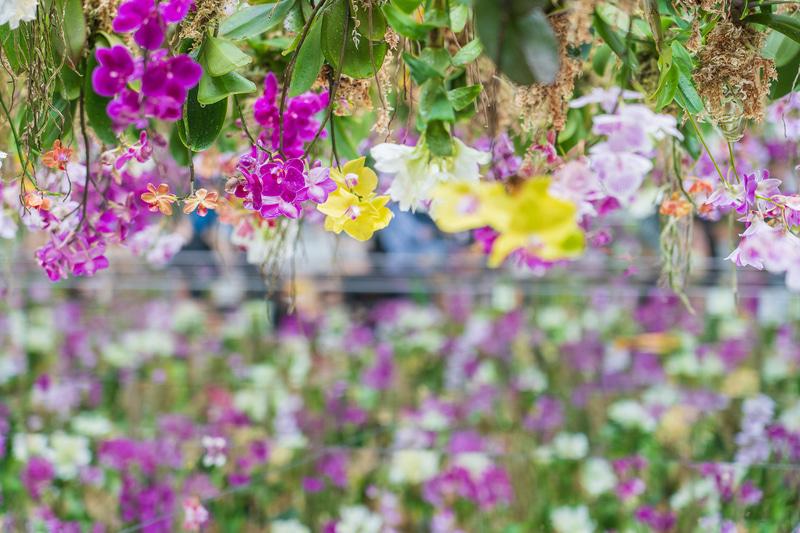 空中で咲く蘭の花を見ているだけでもいい気分。写真撮影する際は、暗くなりがちなので明るめに露出補正をかけるとよいかも