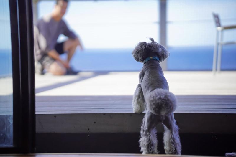 伊豆大島に愛犬と泊まれる「ASOVILUX」をオープンする