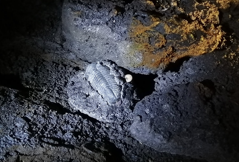 「富岳風穴」で化石発見イベントを実施する
