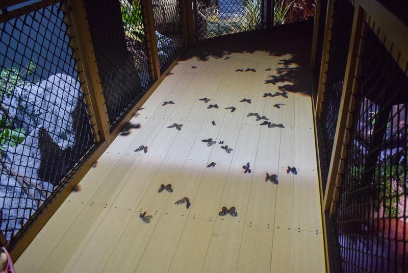 歩いているときに足元にも注意。蝶々の影が飛んできた