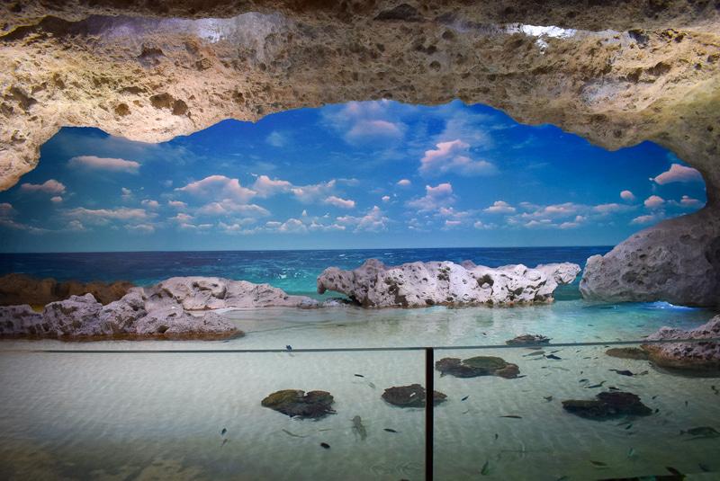 手前の水槽には本物の魚たち、正面のスクリーンにCGが映し出される「うみかじドーム」。現実の時間帯に合わせて夕焼けや夜の海の映像も映し出されたり、たまにクジラやイルカにも出会える