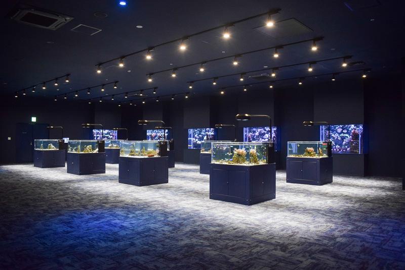 小ぶりの水槽がたくさん並ぶ「ばんない水槽」には、鮮やかな海の生き物たちが展示されている