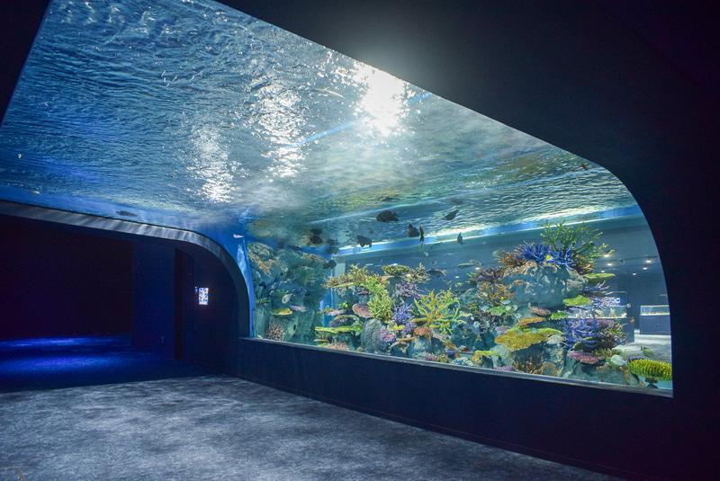トンネル状の水槽「ちゅらさんリーフ」