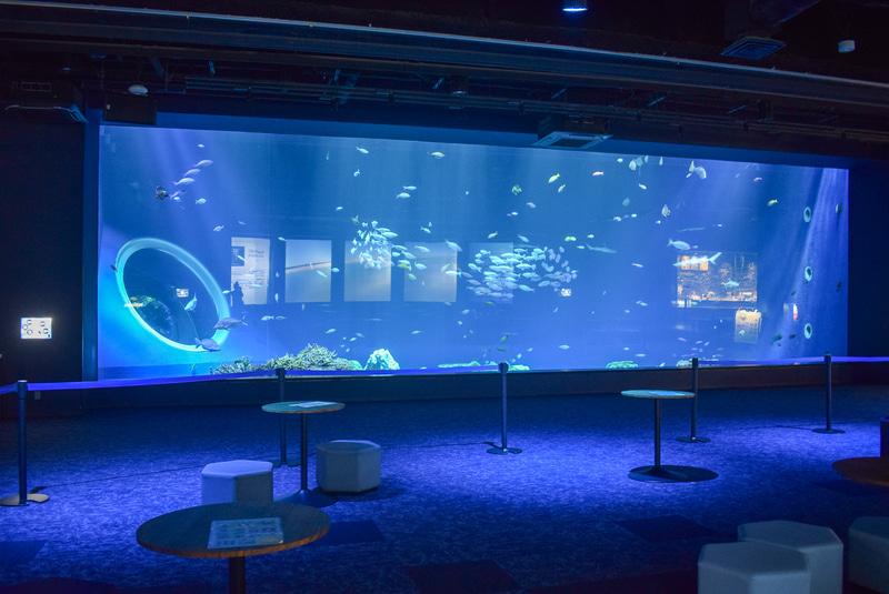 大水槽には小型の熱帯魚から大型のサメやエイ、ウミガメが泳ぐ