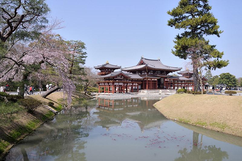 このあたりは定番ポイントだろう。鳳凰堂としだれ桜、そしてそれらを映す阿字池の水面、全て収めることができる