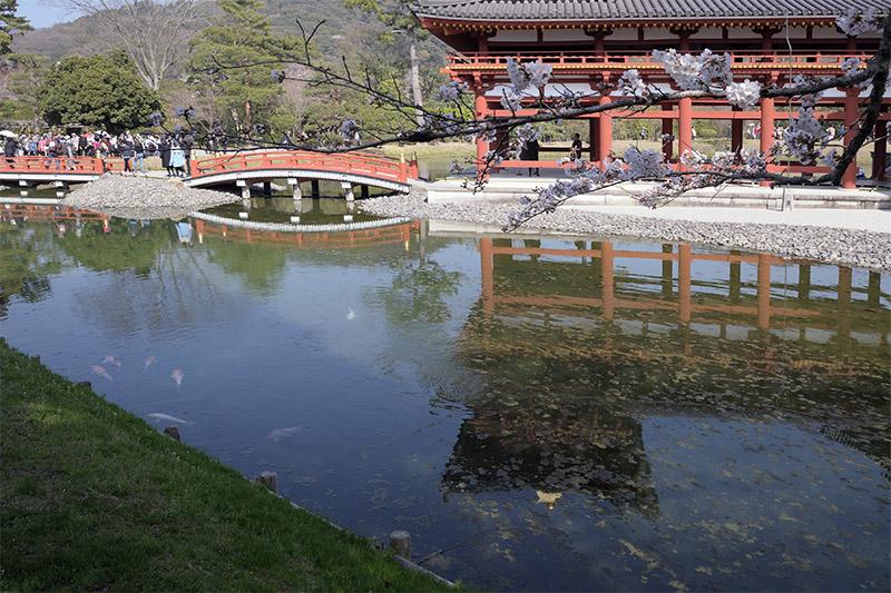 西側の阿字池では、錦鯉が泳ぐ姿も多く見られた