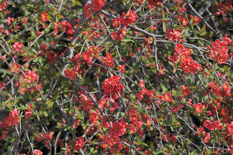 浄土院では、桜とともにこの赤い花も印象的だった
