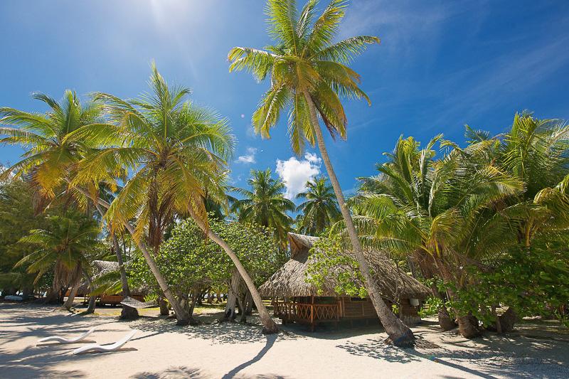ランギロア島からさらにボートで1時間の場所に位置するプライベートアイランドにある5室のバンガロー「ル・ソバージュ」
