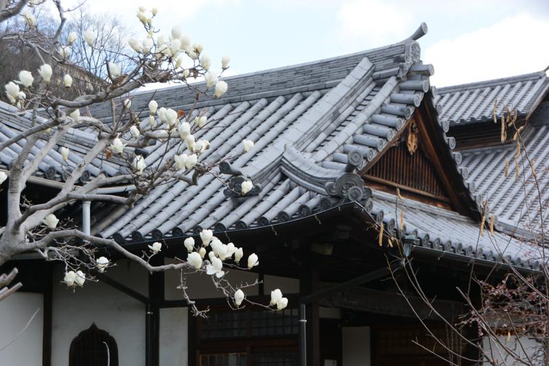 最初に訪れた「持光寺」。桜には少し早い季節だったが、コブシかモクレンがほどよく咲いており目を楽しませてくれた