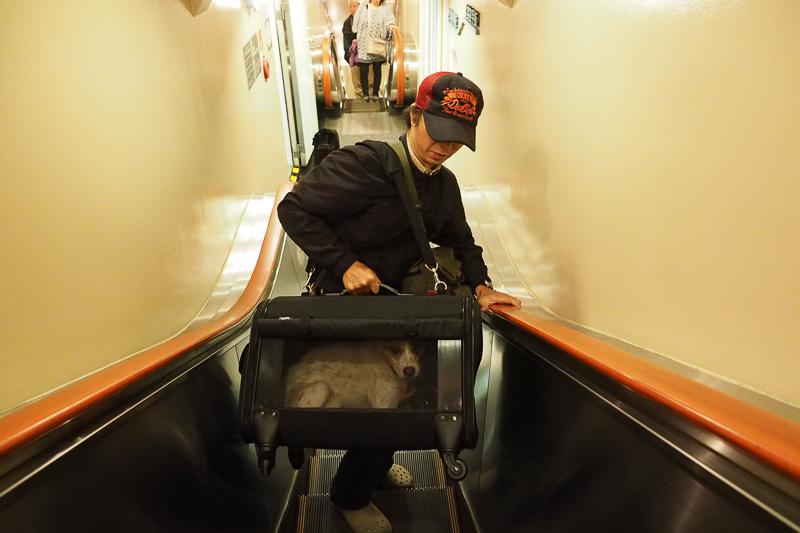 車から降りたら、ドッグルームまでケージの蓋を閉めた状態でみちおを運びます。みちおの体重は11kg。重いので夫に運んでもらいました。