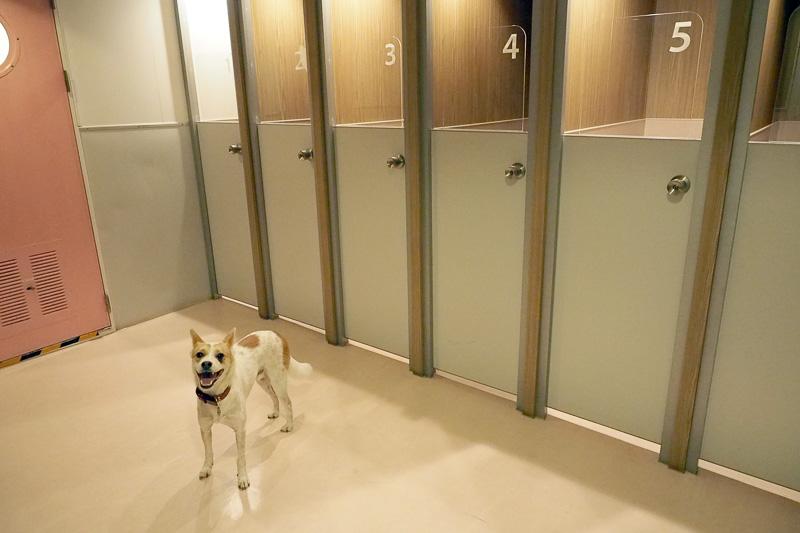 ドッグルーム内でやっとキャリーからみちおを出します。よくがんばったね! 番号の扉ごとにケージ(44×61×51cm、幅×奥行き×高さ)があり、受付でもらったペットシーツを敷き利用します。飼い主がドッグルームにいるときは、ドッグルーム内はフリーにできます。ケージごとにカギが掛けられ、飼い主がドッグルームから離れるときはケージに入れなくてはいけません