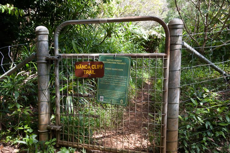 ハワイには野ブタがいるとのことで、その野ブタがトレイルに入っていけないよう、柵が用意してある