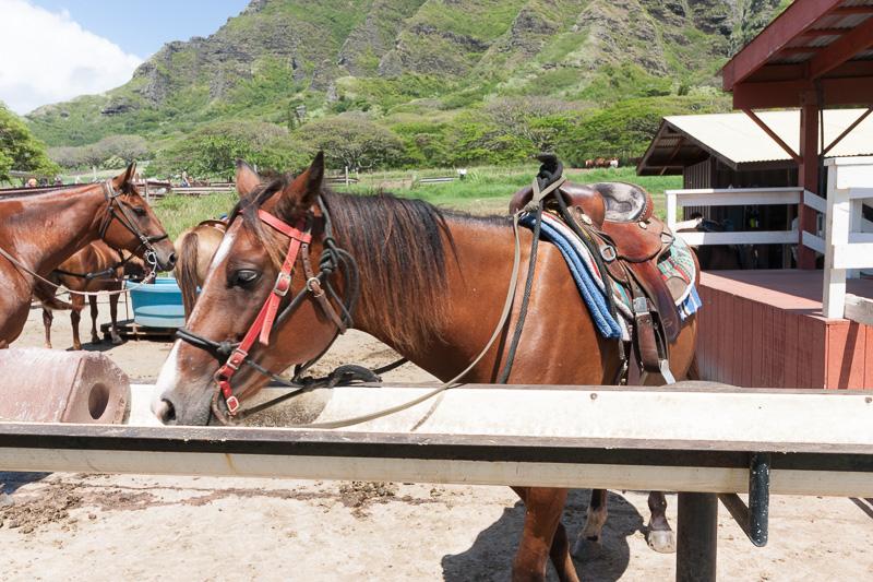 クアロア・ランチの代表的なアクティビティである乗馬