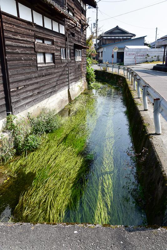 水路の水が集まる川には梅花藻の1センチほどの花も見られた。蛍の幼虫の餌となるカワニナも多く、夏には水辺が蛍の光で照らされるという