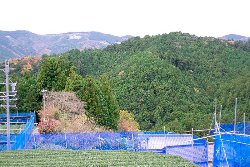 標高が高い場所に「カネタ太田園」の茶畑がある