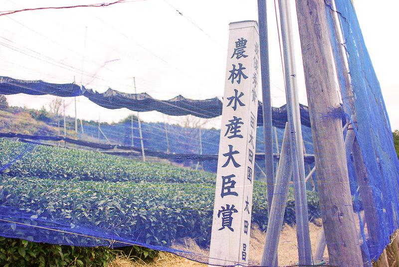 農林水産大臣賞を受賞した畑も風対策の青いネットに囲まれている