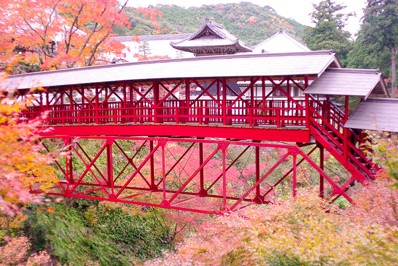 紅葉の中にたたずむ亀背橋
