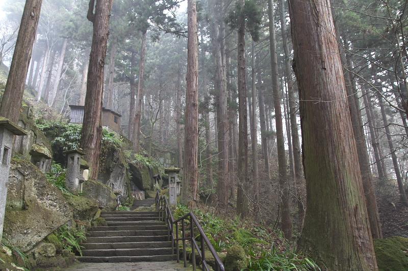 朝靄立ちこめる松林の中をゆっくりと登っていく