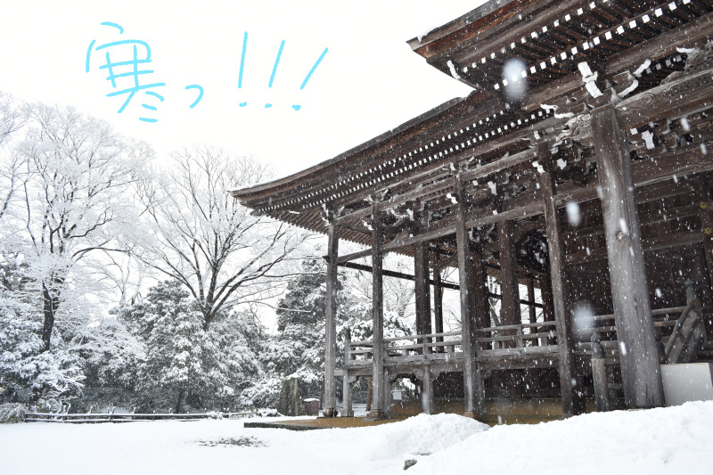 雪が舞う勝興寺の本堂