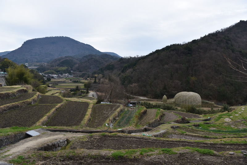 棚田が美しい山間部が舞台の「オリーブの夢」