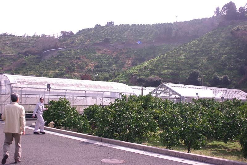 施設の周囲は研究用のみかん畑が続いている
