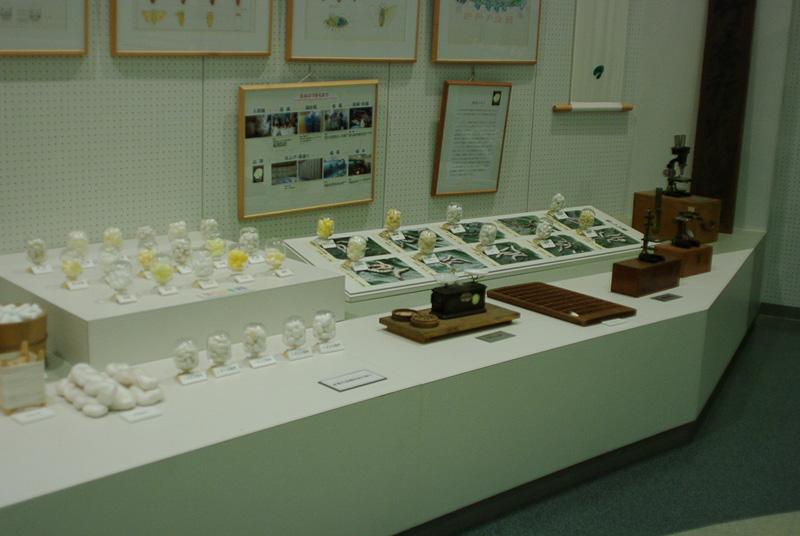 館内には絹糸生産の資料が展示されている