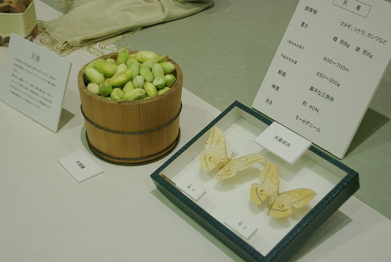 「天蚕」の標本と植物のようなグリーンの繭