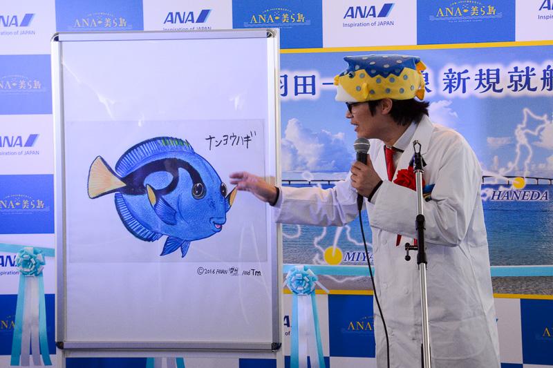 宮古島の魚としてナンヨウハギを紹介