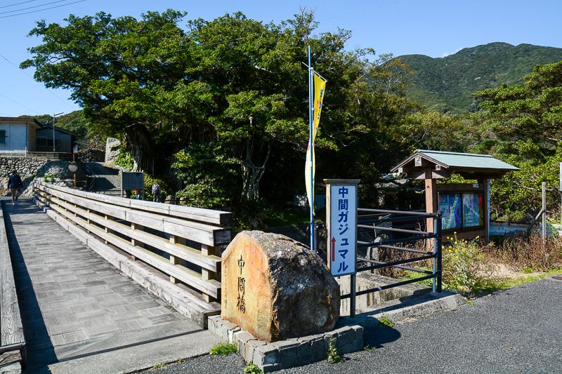集落の名前の付いた「中間橋」の脇にある「中間ガジュマル」。迫力あり、ぽっかり空いた口がちょっと不気味でもあり、どこか心を惹きつけられる