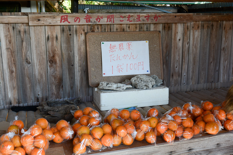 中間橋の近くにあった無人の販売所。ぜひ「タンカン 価格」などでぐぐってみてほしい。この値段のびっくりできる