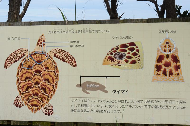 ウミガメの見分け方などもパネルで紹介されている