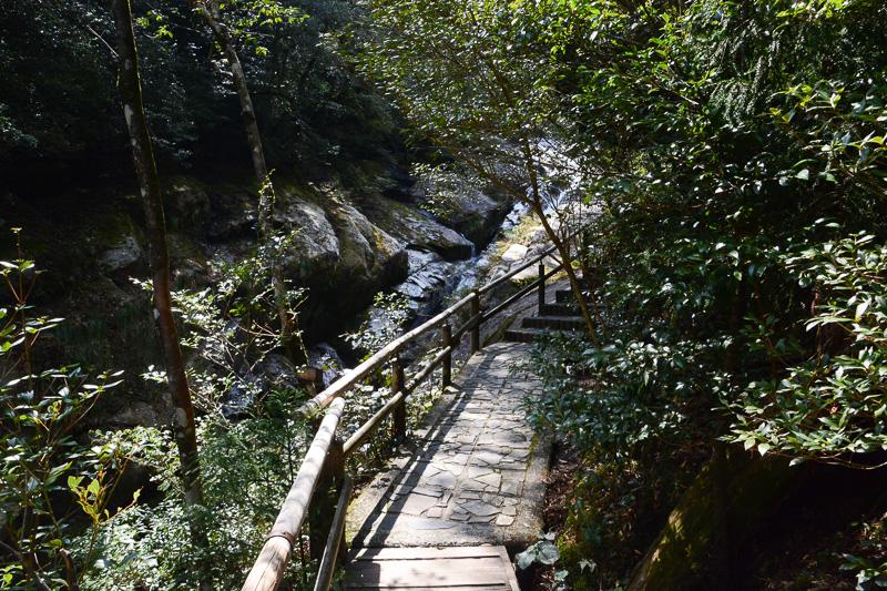 道中八景。急な階段、岩の上、渓流沿いの細道などいろいろな顔の道を歩く。岩をつたって川を横切る際には咳払いするのが屋久島流だ