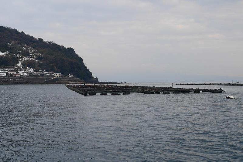 長崎県はトラフグ養殖生産量が日本一。長崎市戸石町の橘湾では、トラフグの養殖が盛ん