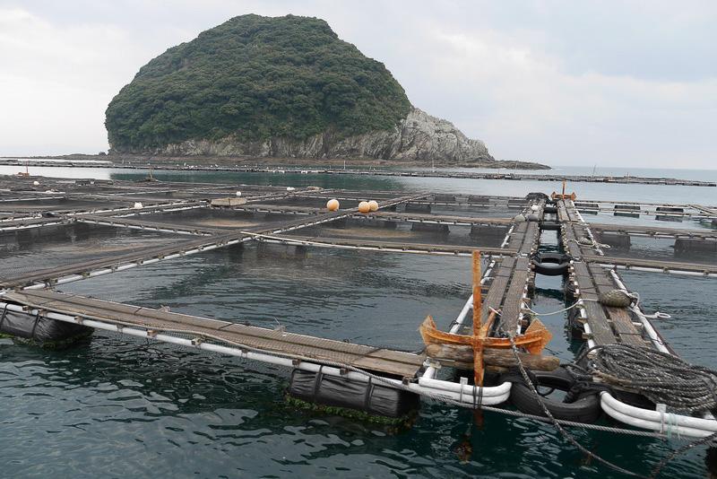この地域は水質に優れていて魚の育成に適しているという