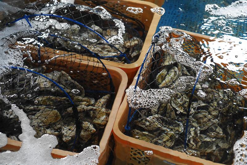 トラフグ以外にも、マダイやシマアジ、牡蠣なども養殖されている