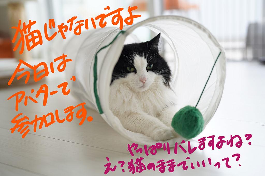 猫じゃないですよ。今日はアバターで参加します