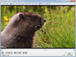 「VLC media player」v1.1.10