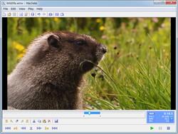 「Machete Video Editor Lite」v3.7